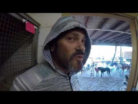 Greyhound Racing Truth Daytona Part1