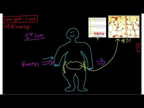 Science of Weight-Loss: Pathophysiology of Obesity