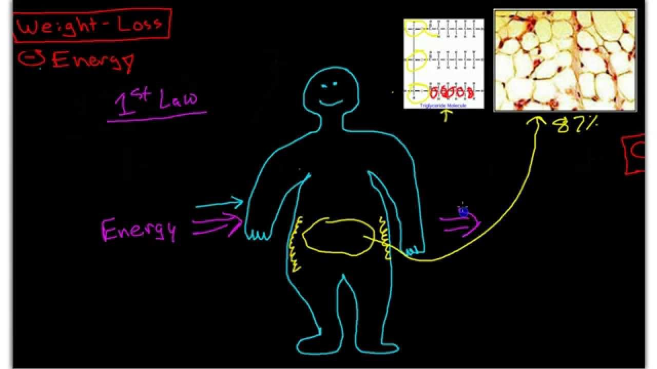 Science of Weight-Loss: Pathophysiology of Obesity - YouTube