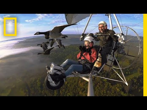 Soar Alongside Migrating Birds—and the Man Who Flies With Them | National Geographic