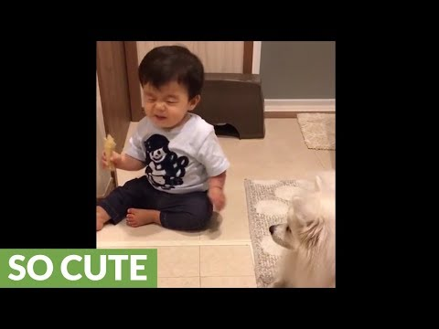 Baby smells dog's chew toy, delivers priceless reaction