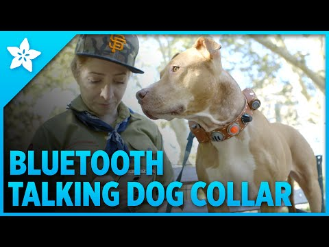 Talking Dog Collar with Bluetooth Control