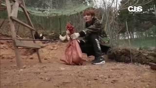 닭잡기를 걸고 펼쳐진, 흥미진진한 장작패기 대결! 닭장행을 피하고 싶...
