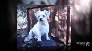 Havamalt Dog breed