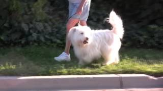 Canine Good Citizen Psa