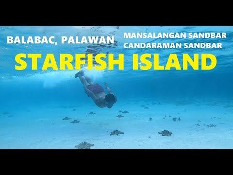STARFISH ISLAND IN | BALABAC PALAWAN Day2 (part2)