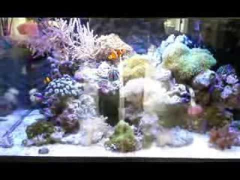 my 150 liter reef aquarium youtube. Black Bedroom Furniture Sets. Home Design Ideas