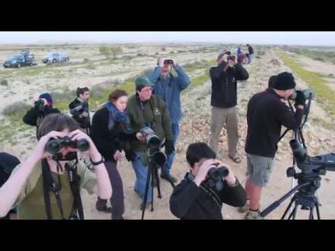 Champions of the Flyway Bird Race - Israel