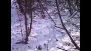 haunted woods in youngstown,ohio