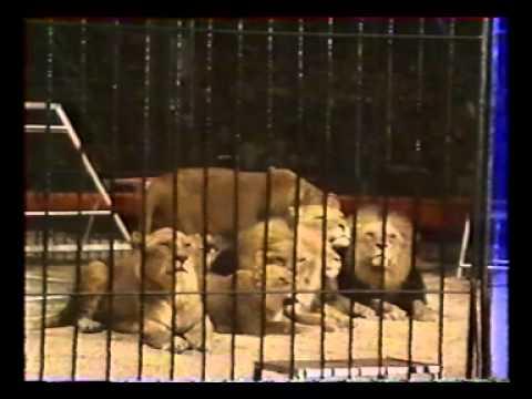 10 festival circus mc1984