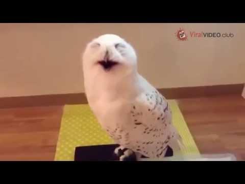 Lustige Eule lacht wie ein Mensch