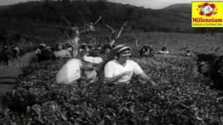 Mamalayile - Malayalam Film Song - Aparadhi
