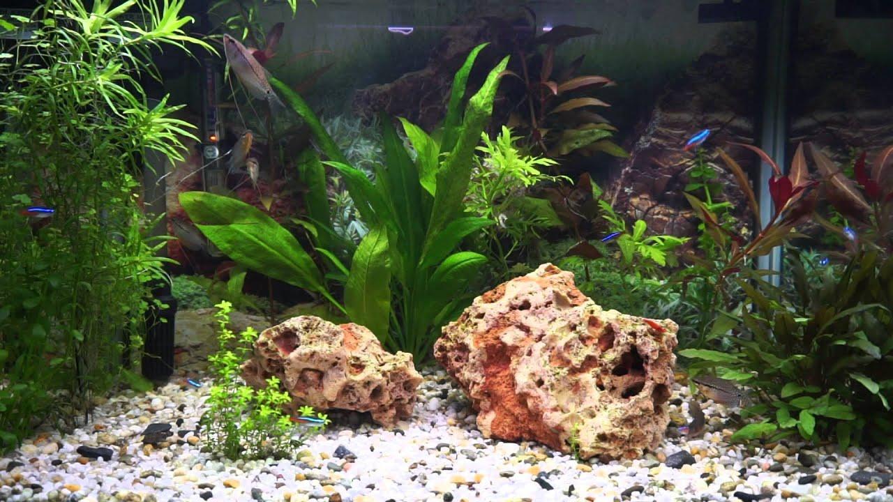 1 Hour Relax Ambient Music Aquarium Video