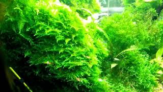 Речные рыбки в домашнем аквариуме