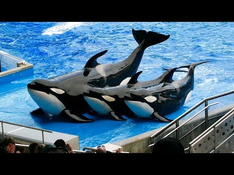 SeaWorld Banned From Captive Whale Breeding