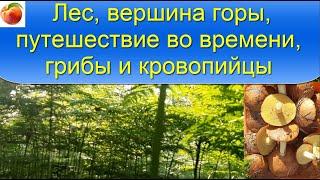 Лес Релакс Горы Грибы Туризм Погружене Поход Природа Сибирь Палеозойская Эра Пение птиц Для души