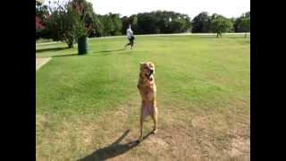 Faith the 2 legged dog