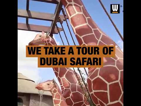 We take a tour of Dubai Safari