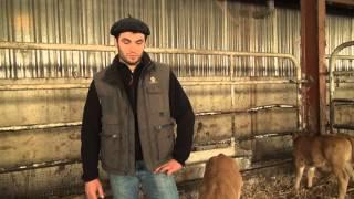 Le Boeuf fermier Aubrac une passion contagieuse...