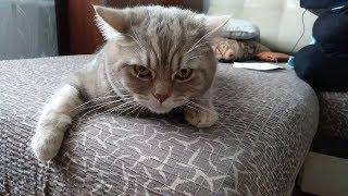 Кот говорит отойди ото убью.