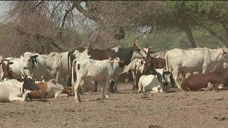 Niger, L'importance du secteur de l'élevage