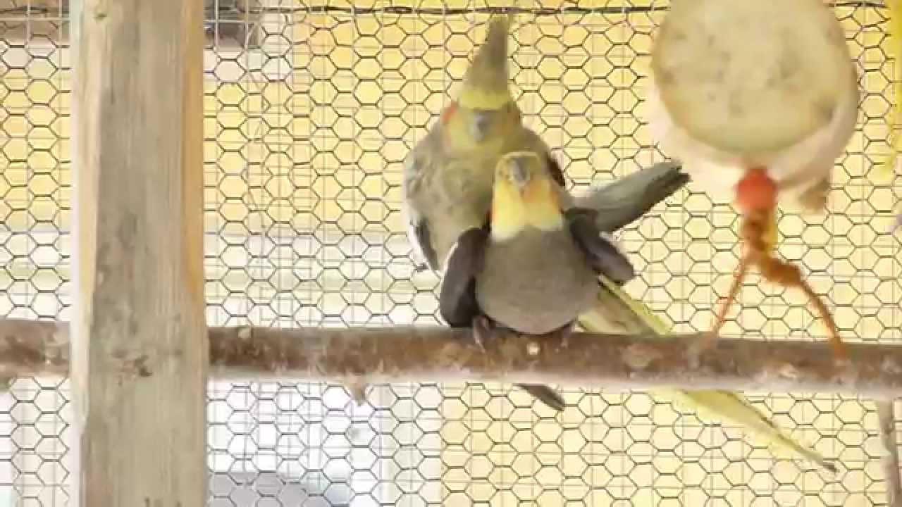 Vogelsex