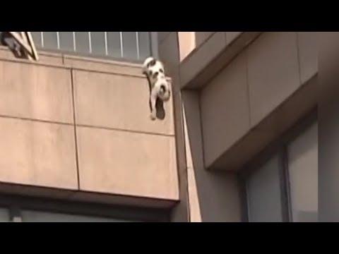 Este gato cae desde una gran altura y el resultado es INCREIBLE!