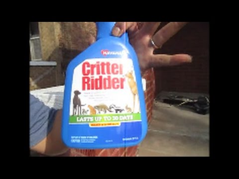 HOW to get rid of stray cats update - YouTube