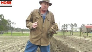 How to Start an Asparagus Bed