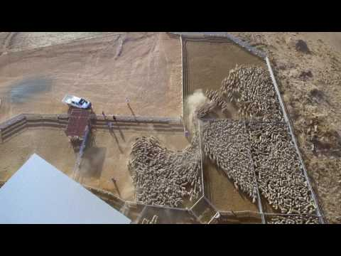 """Bucki"" sheep farm, Henty NSW Australia drone video"