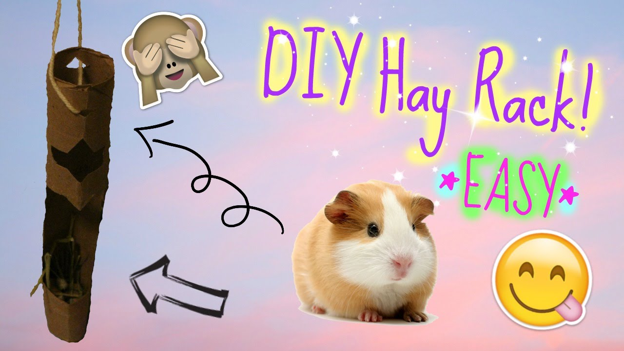 pringles out pig can of guinea feeder pin pinterest stuff ginny