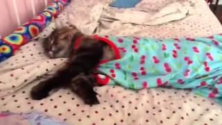 Sleeping cat doesn
