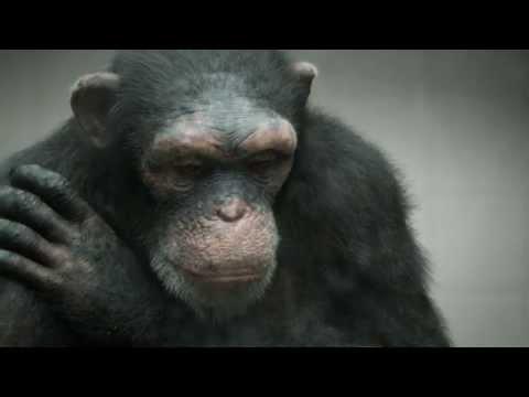 "PETA - ""98% Human"" (BBDO New York)"