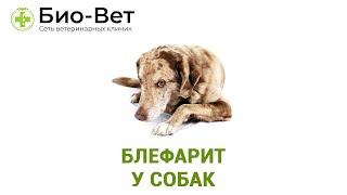 Блефарит у собак. Ветеринарная клиника Био-Вет.
