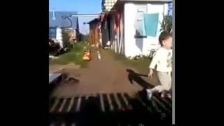 ЖЕСТЬ. Девяти месячного малыша съела собака