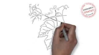 Как нарисовать виноград за полминуты(Как нарисовать виноградную ветку поэтапно с использованием карандаша за короткий промежуток времени...., 2014-06-24T14:27:53.000Z)