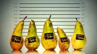 Предвыборная агитация банана Анатолия