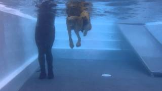 Retreat Canine Hydrotherapy