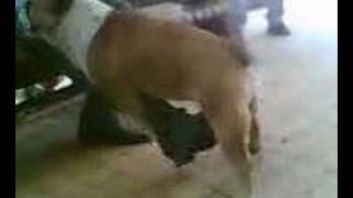 azgın köpek 2