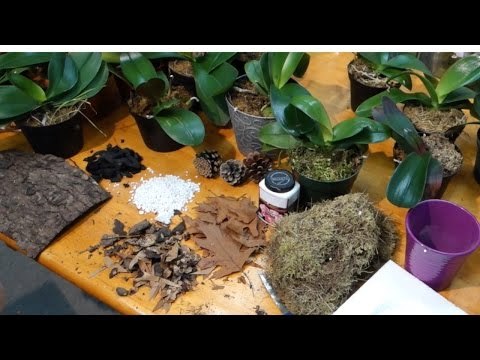 How to prepare the best potting media for Phalaenopsis orchids