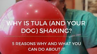 Why Your Dog Shakes and Trembles