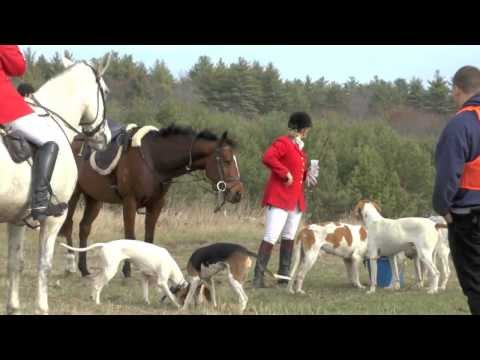 Wentworth Fox Hunt Rochester, NH DRAGGED NOT LIVE