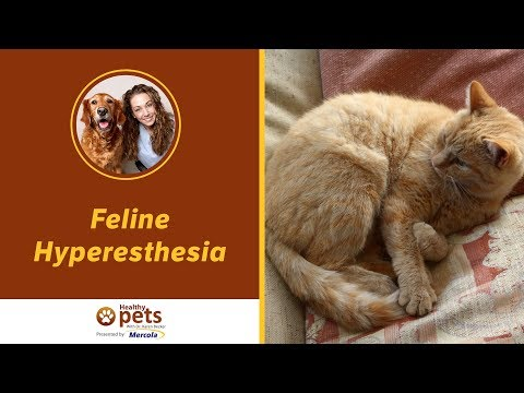 Dr. Becker On Feline Hyperesthesia