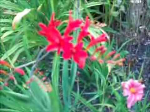 Valeries Garden July 2011wmv