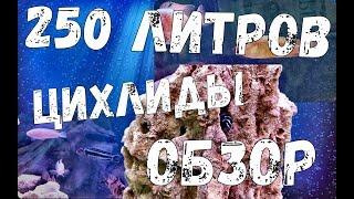 Цихлиды из аквариума 250 литров. Меланохромис Майнгано. Псевдотрофеус Демасони. Лабидохромис еллоу.