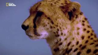 Nat Geo Wild  - Secrets of the wild / Тайните на дивата природа На открито