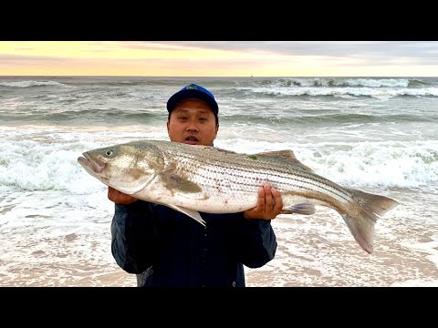 """40"""" Cow Striped Bass On The Surf"""