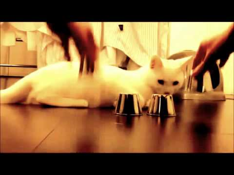 the smart cat great قط دكي روعة