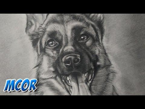 Como Dibujar un Perro Pastor Aleman  YouTube