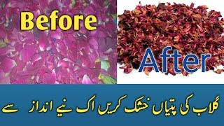 How to Dry Rose Petals in Home  & Natural  Benefits in Urdu/Hindi 2019.
